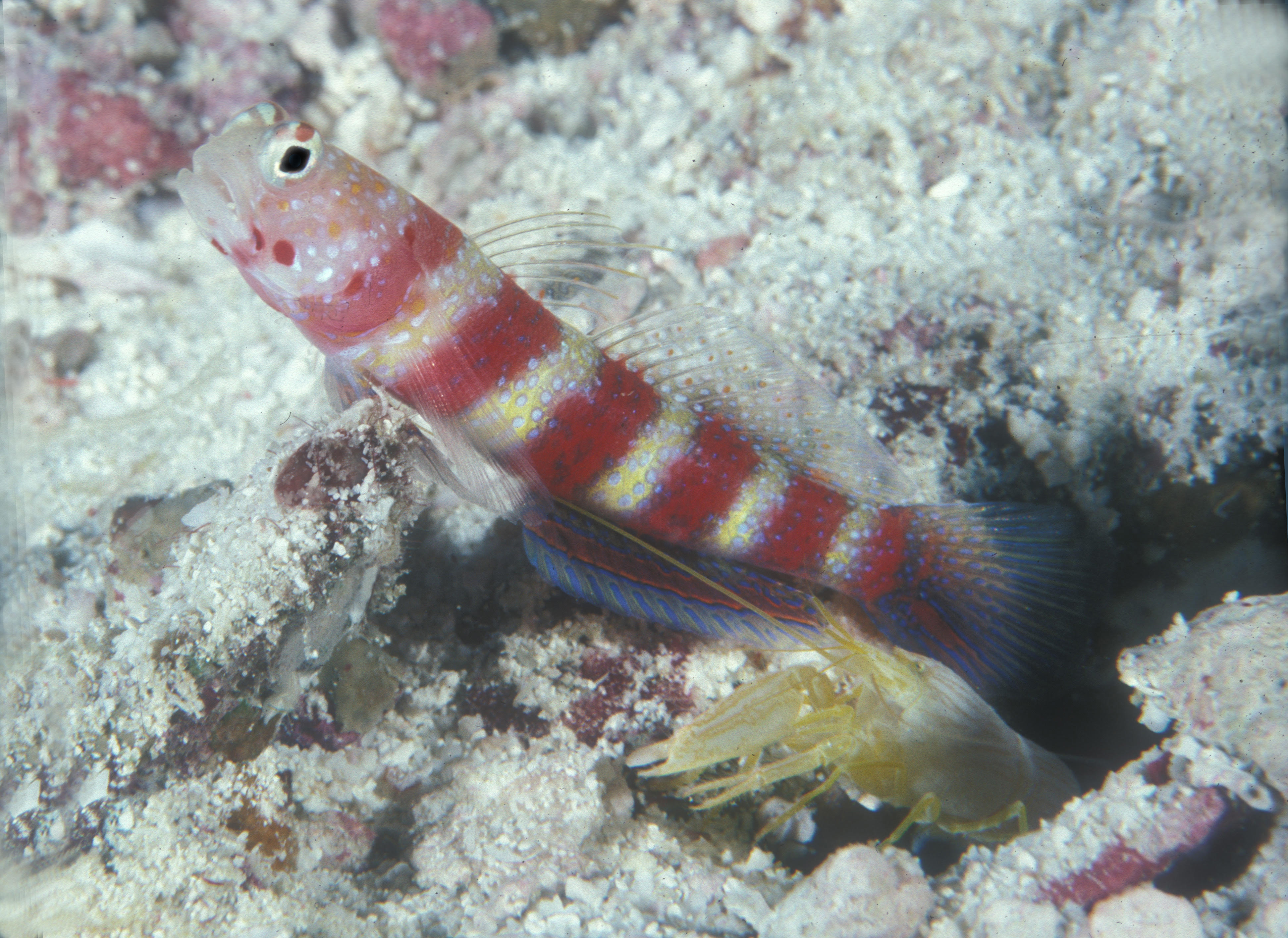 Goby 2